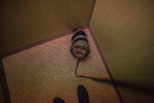 Dog, Elevator