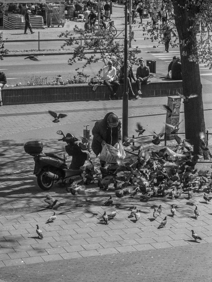 Fåglar, moped, 2017-05-06