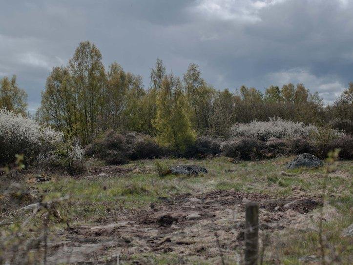 Staket, Träd, Himmel, Moln, Foto: Karl Larsson