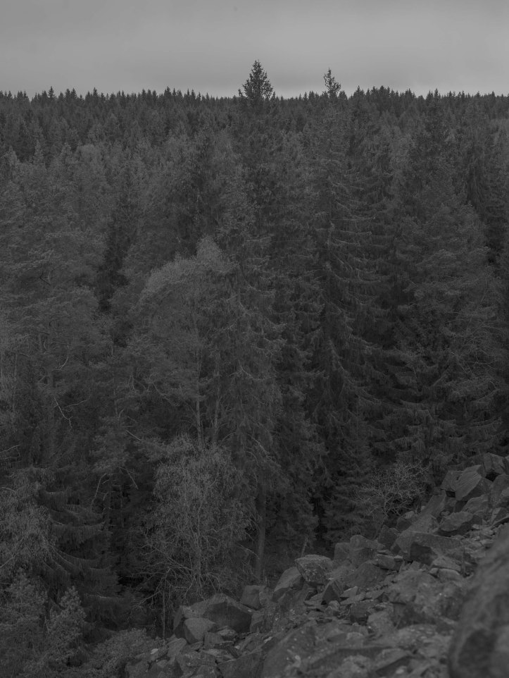 Svartvitt foto, Skog, sluttning, himmel, sten, 2017-05-09, 2017, Foto: Karl Larsson
