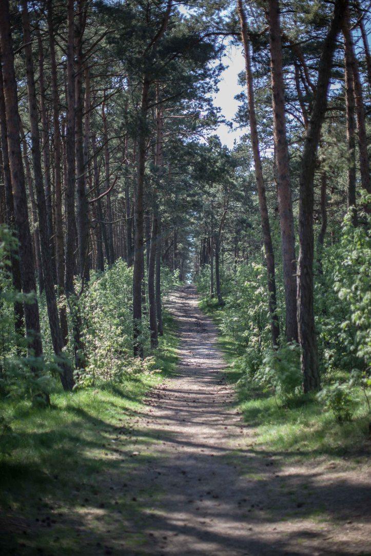 2017-05-14, Skog, barrträd, gång, stig, path, woods, pine trees,