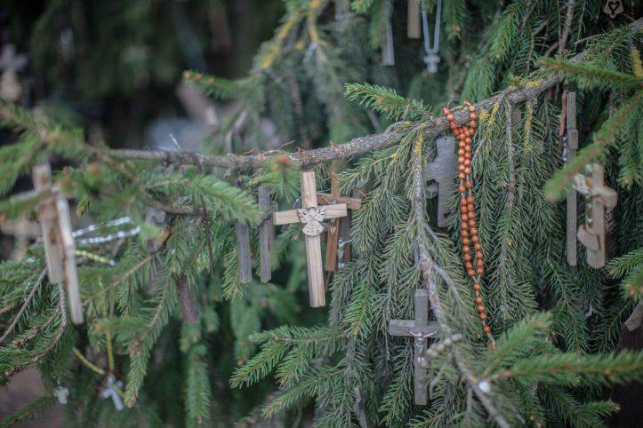 2017-05-15, Korskullen barrträd med småkors uppsatta på grenar, Barrträd, barrträd, småkors, kors, Foto: Karl Larsson