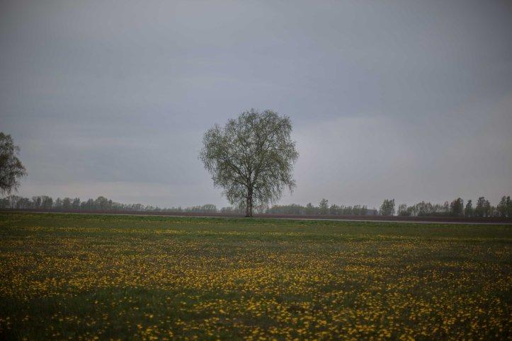 Träd, blommor, gräs, himmel, sky, Foto: Karl Larsson