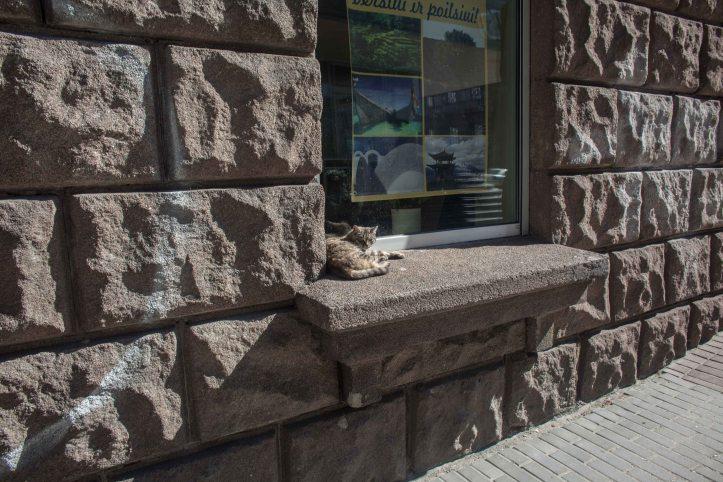 Cat, windows, 2017-05-17, Foto: Karl Larsson
